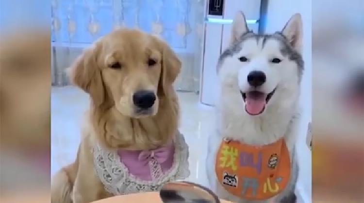 Dog Reaction to Cutting Cake