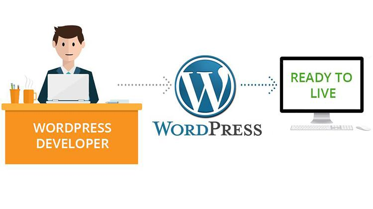vacancy wordpress developer