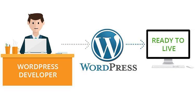 vacancy wordpress developer